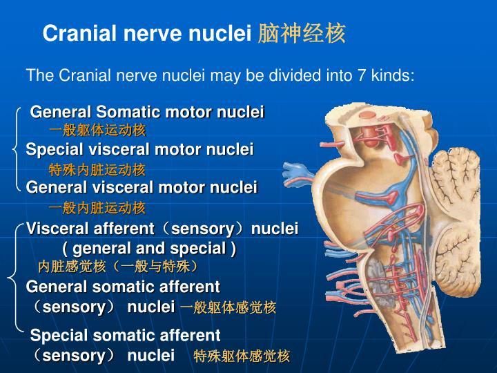 General Somatic motor nuclei