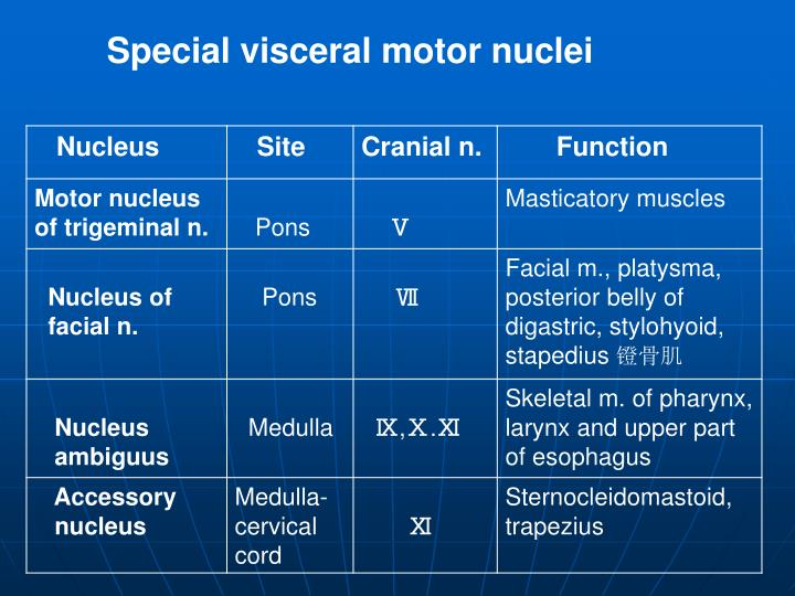 Special visceral motor nuclei