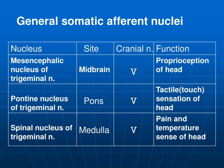 General somatic afferent nuclei