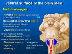 ventral surface of the brain stem