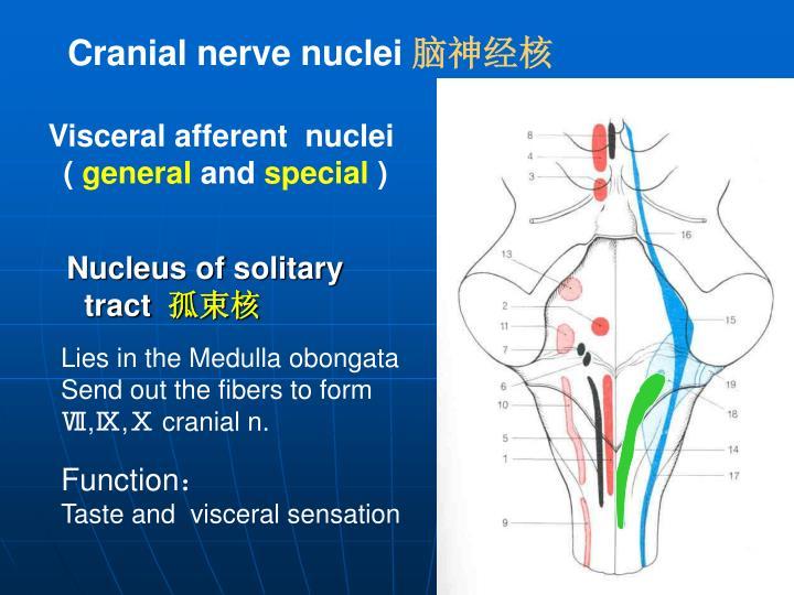 Visceral afferent  nuclei
