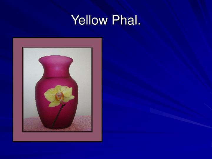 Yellow Phal.