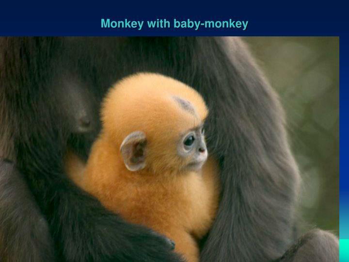 Monkey with baby-monkey