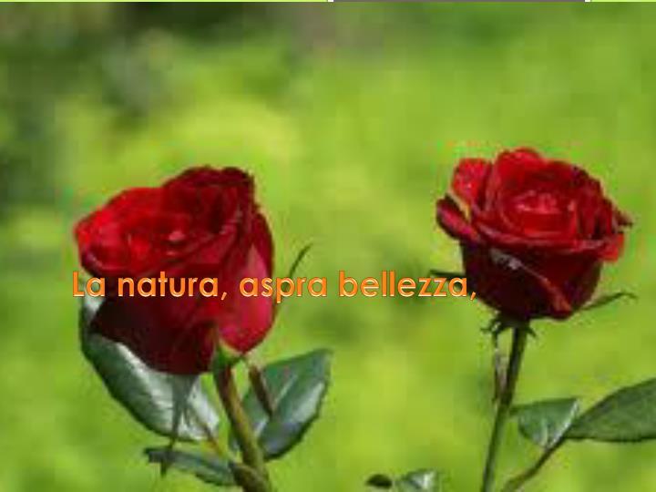La natura, aspra bellezza,