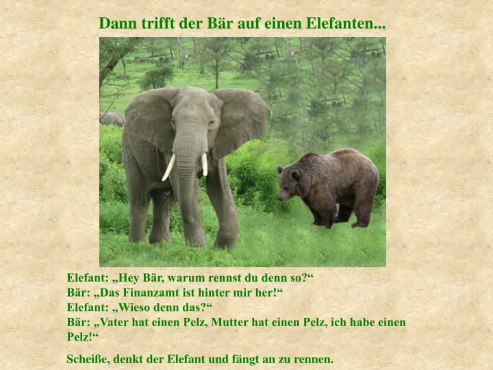 Dann trifft der Bär auf einen Elefanten...