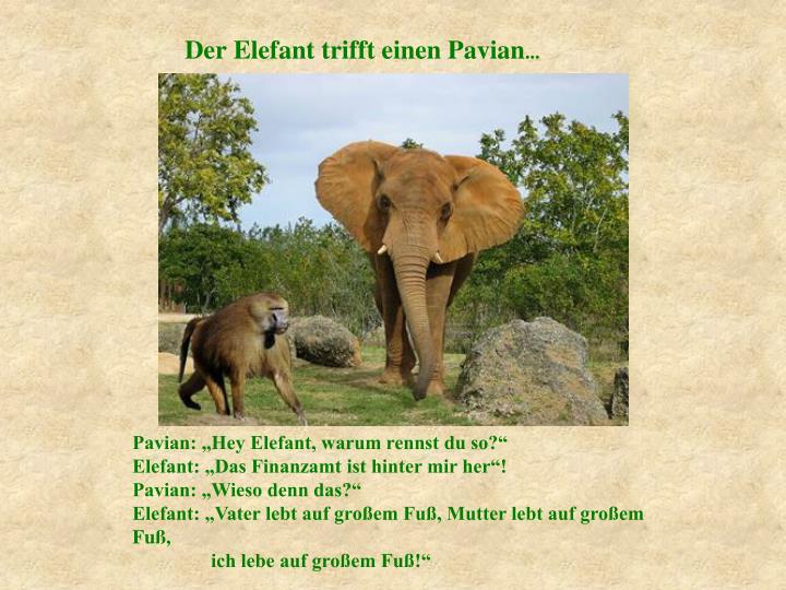 Der Elefant trifft einen Pavian