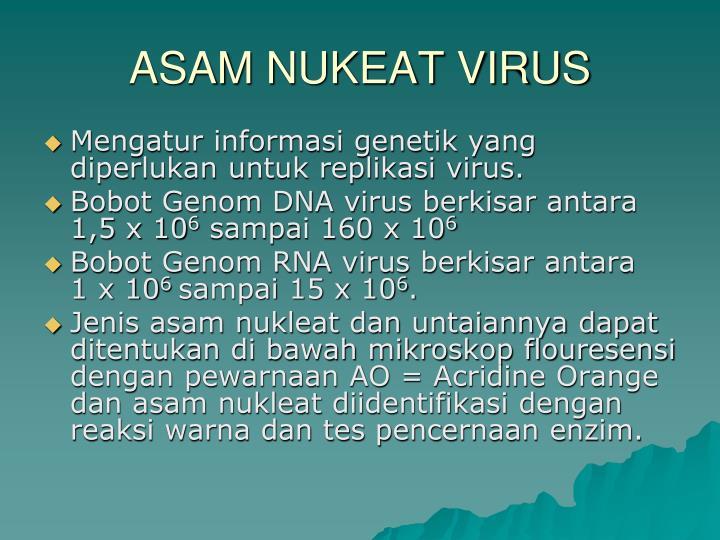 ASAM NUKEAT VIRUS