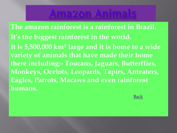Amazon animals