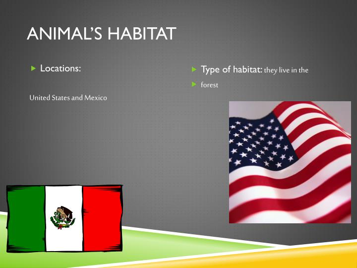 Animal's Habitat