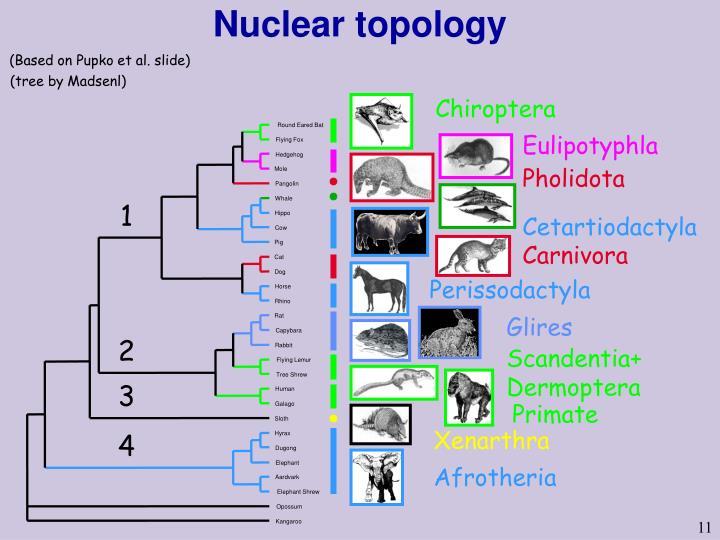 Nuclear topology