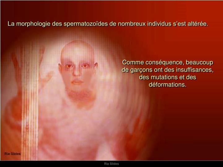 La morphologie des spermatozoïdes de nombreux individus s'est altérée.