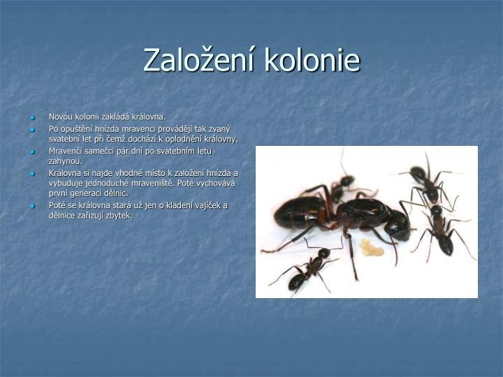 Založení kolonie