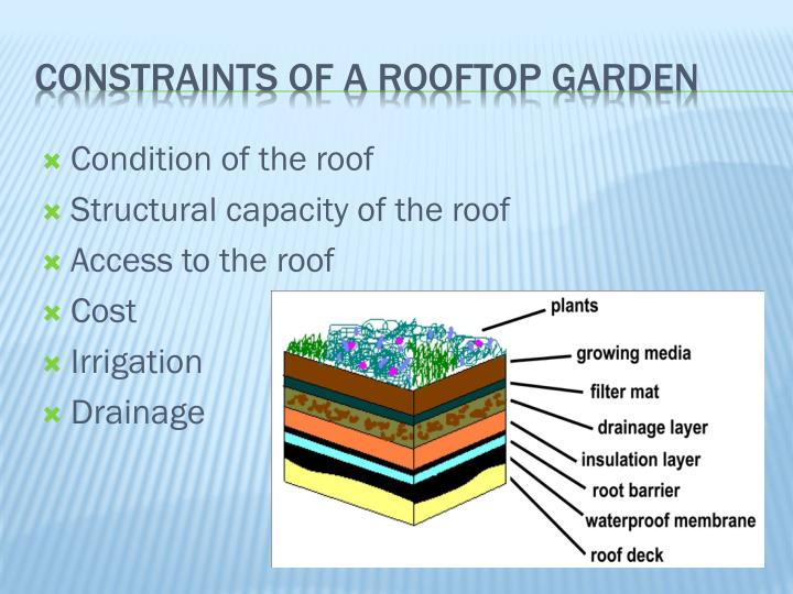 Condition of the roof