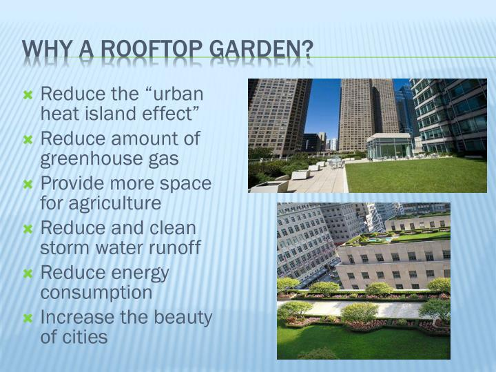 Why a rooftop garden