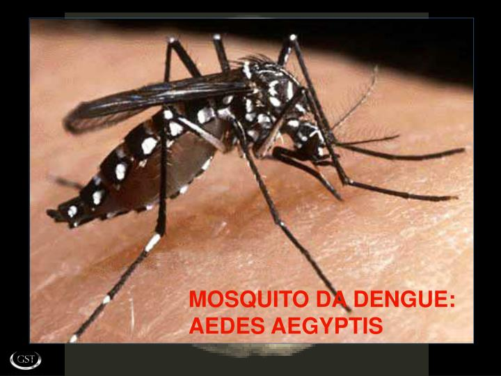 MOSQUITO DA DENGUE: AEDES AEGYPTIS