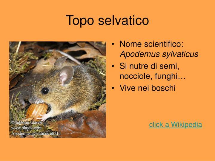 Nome scientifico: