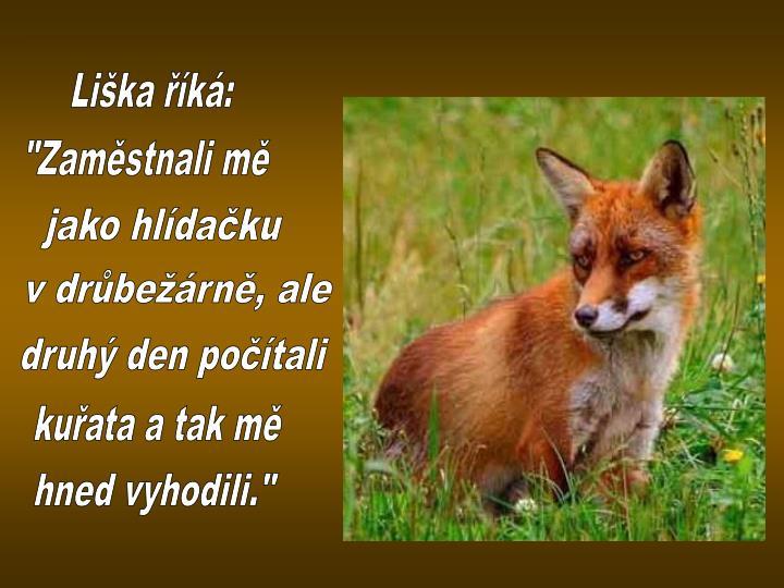 Liška říká: