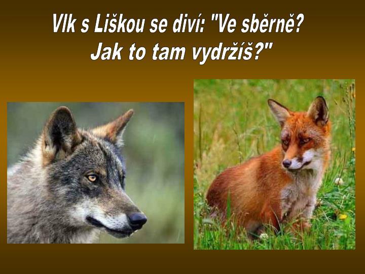 """Vlk s Liškou se diví: """"Ve sběrně?"""