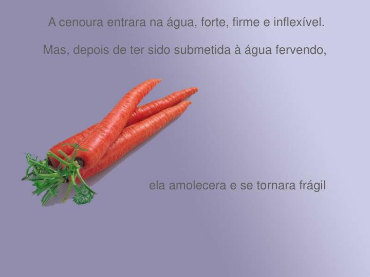 A cenoura entrara na água, forte, firme e inflexível.
