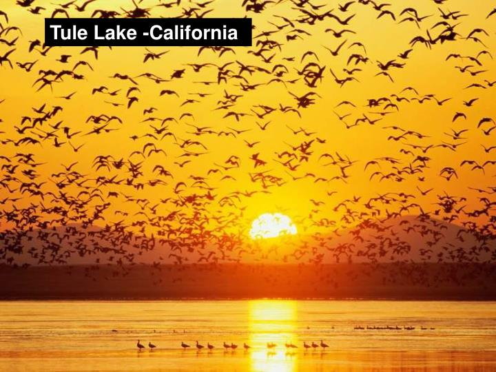 Tule Lake -California