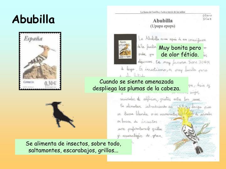 Abubilla