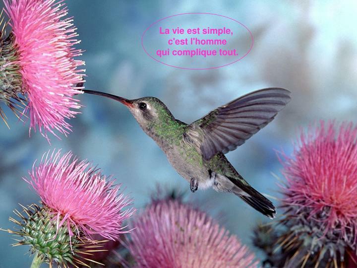 La vie est simple,