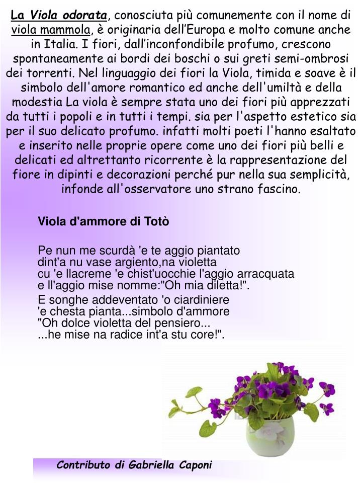 Contributo di Gabriella Caponi