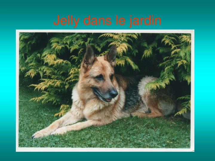 Ppt jelly berger allemand 01 01 1994 20 10 2006 for Agility au jardin