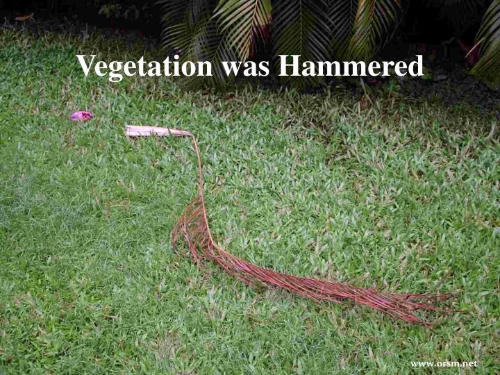 Vegetation was Hammered