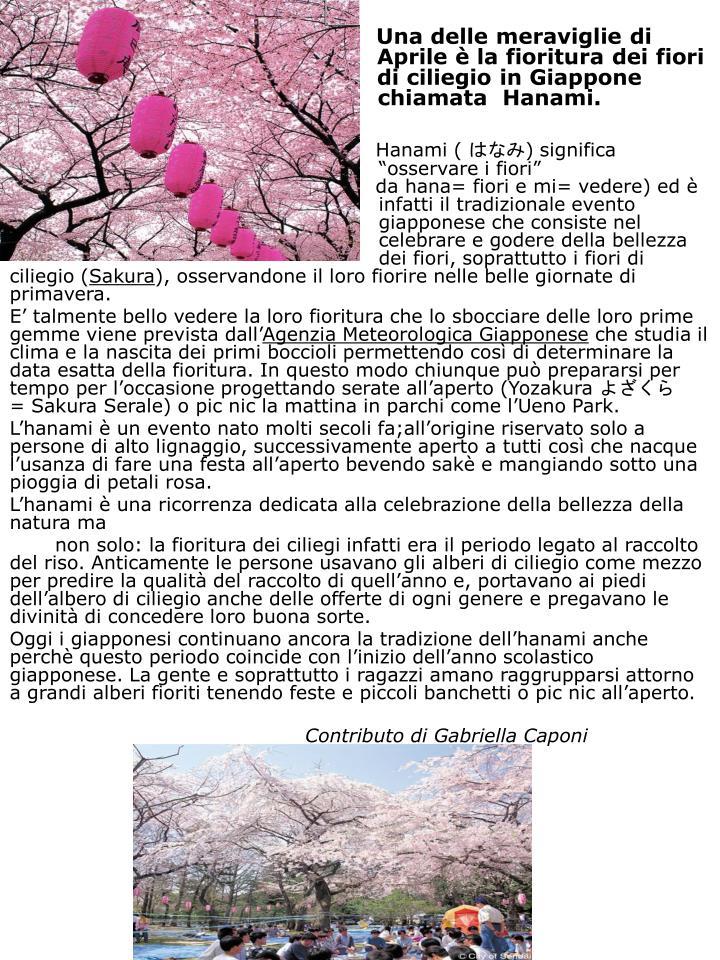 Una delle meraviglie di                                                    Aprile è la fioritura dei fiori                                          di ciliegio in Giappone                                 chiamata Hanami.