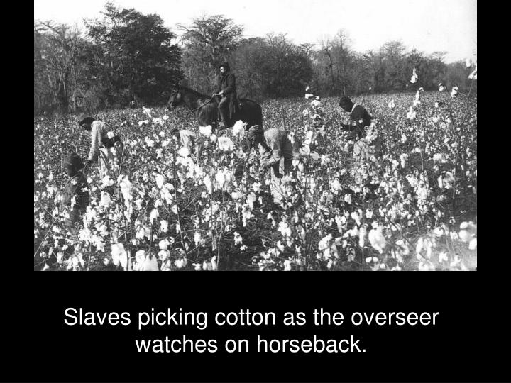 Slaves picking cotton as the overseer watches on horseback.