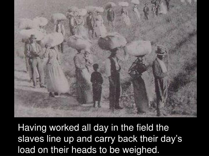 Having worked all day in the field the slaves line up and carry back their day's load on their heads to be weighed.
