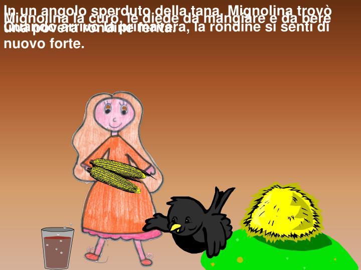 In un angolo sperduto della tana, Mignolina trovò una povera rondine ferita.