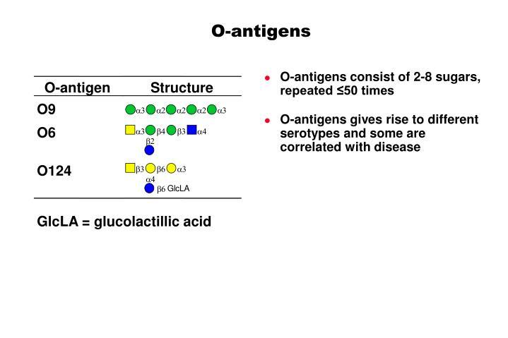 O-antigen