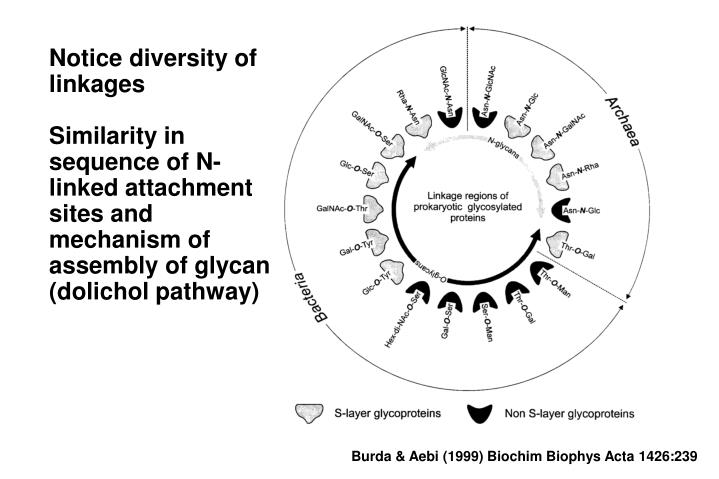 Notice diversity of linkages