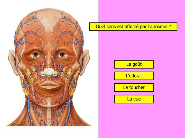 Quel sens est affecté par l'anosmie ?