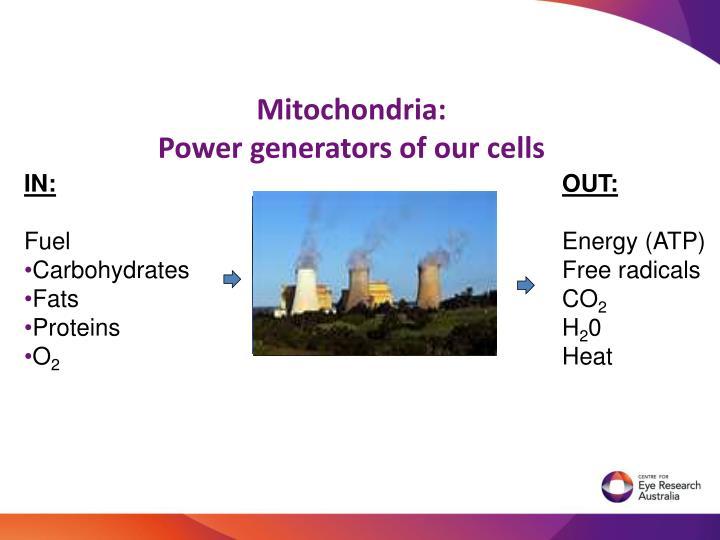 Mitochondria: