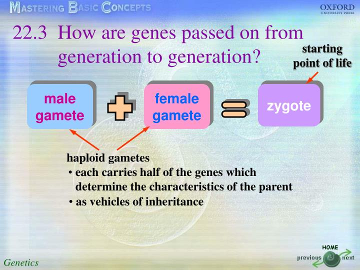22.3 How are genes passed on from generation to generation?