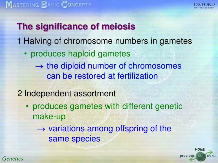 The significance of meiosis