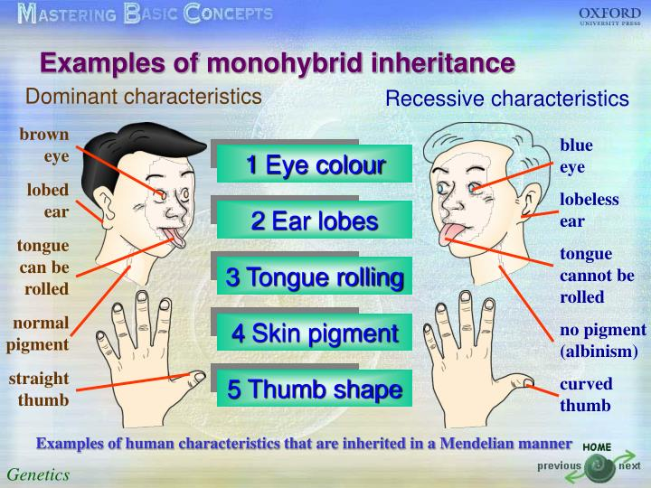 Examples of monohybrid inheritance