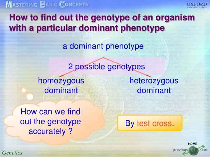 How to find out the genotype of an organism with a particular dominant phenotype
