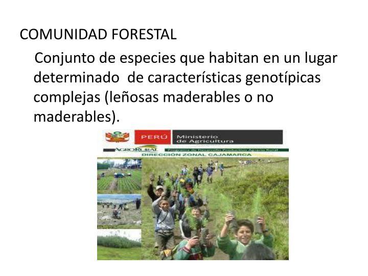 COMUNIDAD FORESTAL