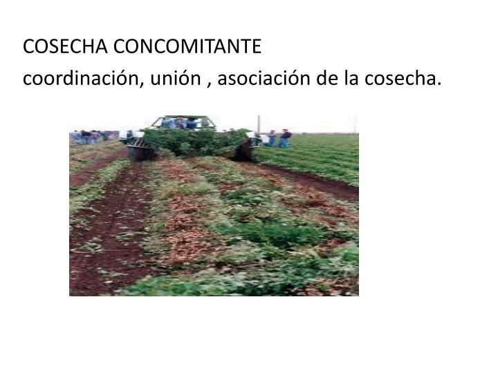 COSECHA CONCOMITANTE