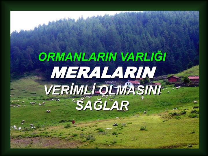 ORMANLARIN VARLIĞI