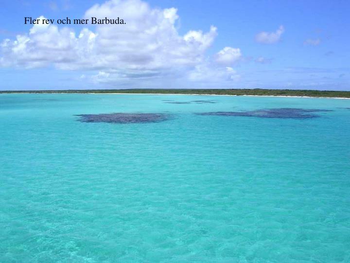 Fler rev och mer Barbuda.
