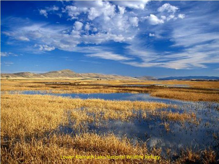 Lower Klamath Lake National Wildlife