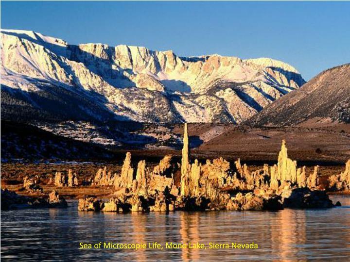 Sea of Microscopie Life, Mono Lake, Sierra