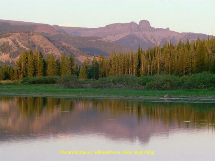 Absarokameus, Yellowstone Lake, Wyoming