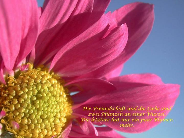 Die Freundschaft und die Liebe sind zwei Pflanzen an einer Wurzel.