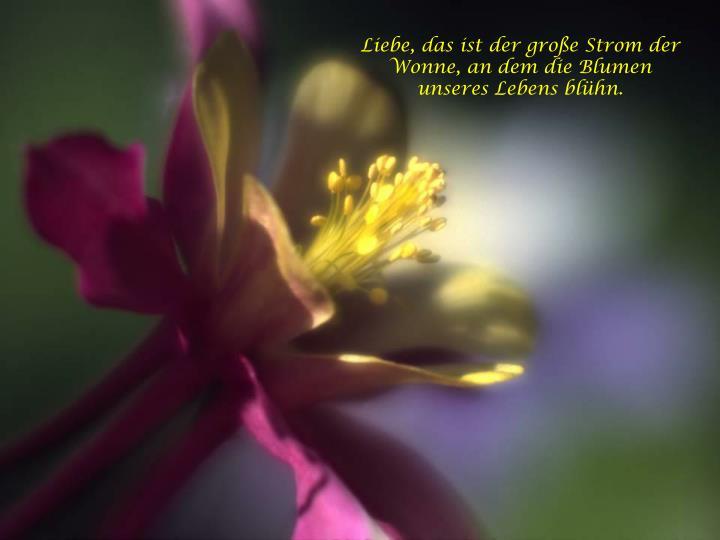 Liebe, das ist der große Strom der Wonne, an dem die Blumen unseres Lebens blühn.
